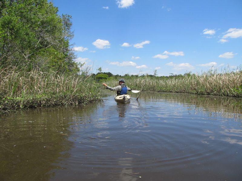 Kayaking With Altamaha Coastal Tours: Ancient Tidal Forests to ...