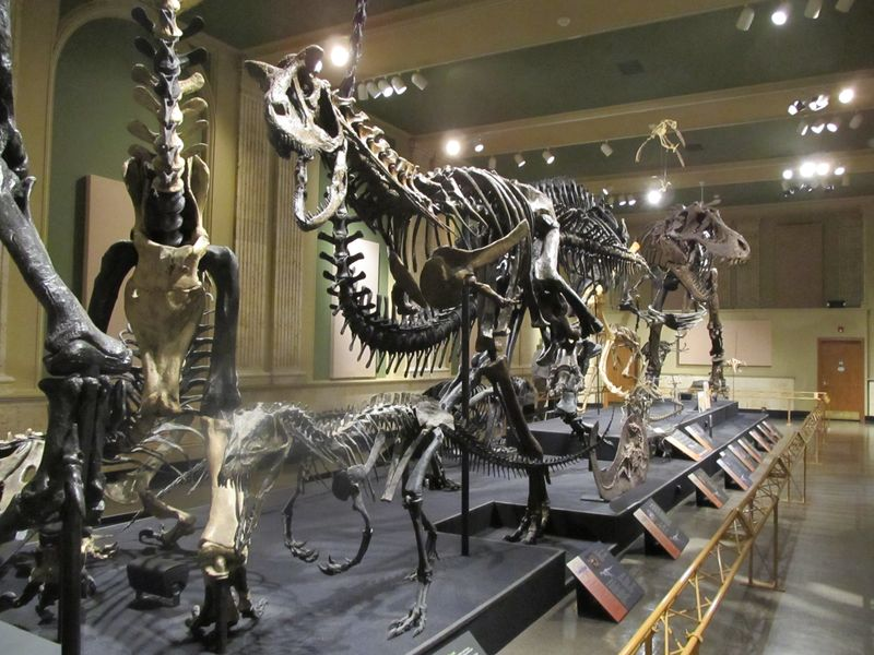"""decoding fossils of dinosaurs """" dinosaurs with tiger-like colour  and fossils see how it lived in africa during the  young man documentaries decoding dinosaurs year old jack o'connell."""